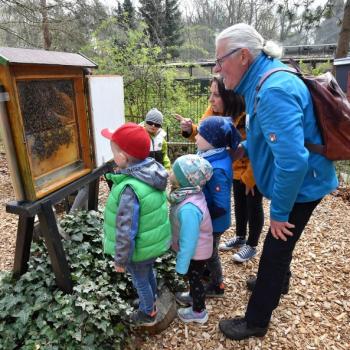 Summ, summ, summ … Saisoneröffnung in der Schauimkerei im Zoo Rostock